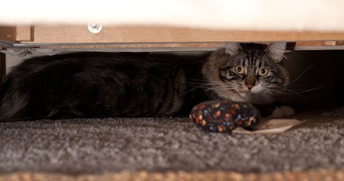 Thomas under couch 1