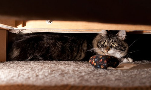 Thomas under couch 2