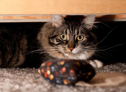Thomas under couch 3