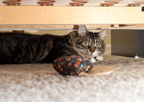 Thomas under couch 5