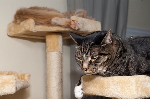Henry and Mama on cat tree together 1