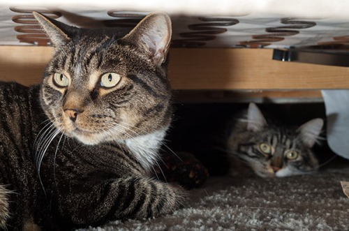 Henry and Thomas under couch 2