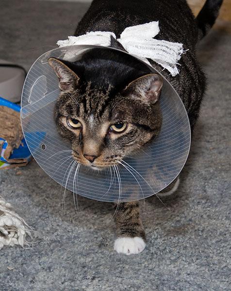 Henry's return from vet 11