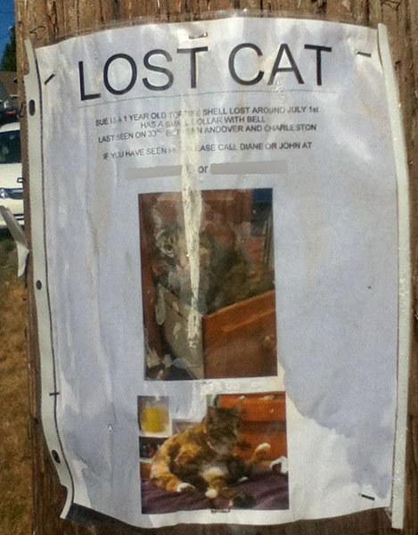 Lost Cat Poster- Sue-2