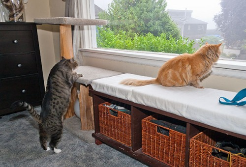 Mama Cat and Oliver interaction 2