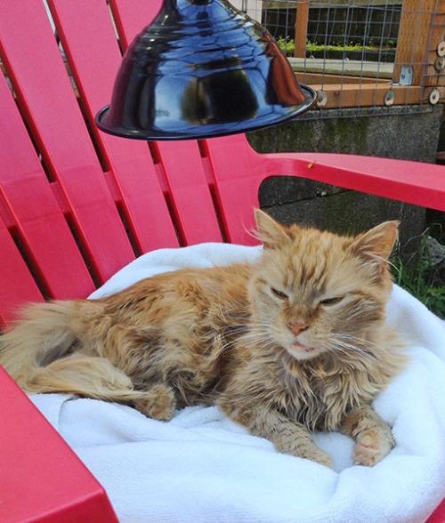 Mama Cat Outdoor