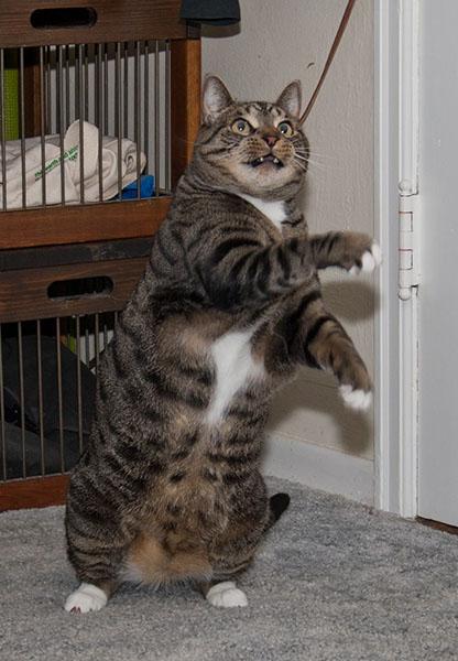 Oliver true squat