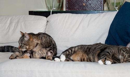 Otis and Oliver eavesdropping 3