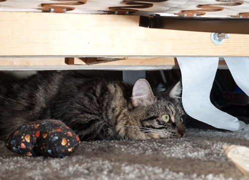 Thomas under couch,