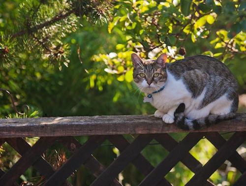 Unknown Limbo Cat, 091413-1