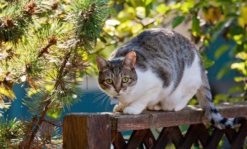 Unknown Limbo Cat, 091413-2