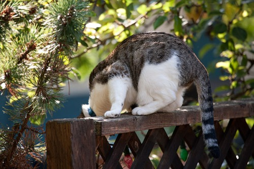 Unknown Limbo Cat, 091413-4