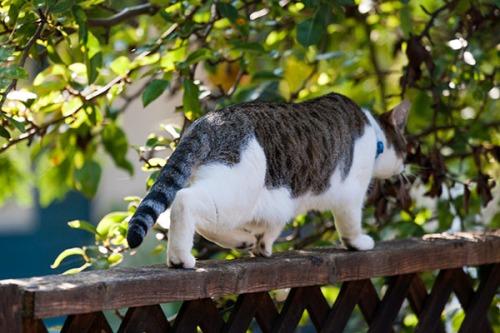 Unknown Limbo Cat, 091413-5