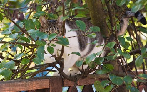 Unknown Limbo Cat, 091413-6