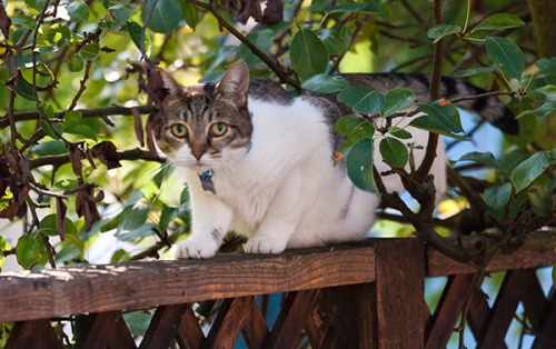 Unknown Limbo Cat, 091413-7