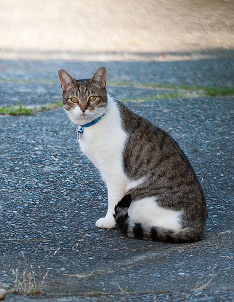 Unknown Limbo Cat, 091413-9