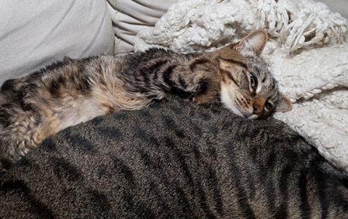 Best Pillow 1