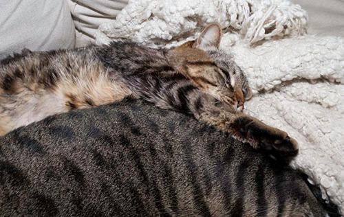 Best Pillow 3
