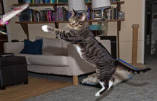 Henry flying leap