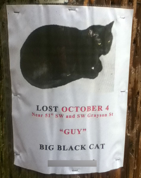 Lost Cat Poster- Guy