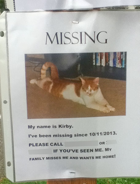 Lost Cat Poster- Kirby