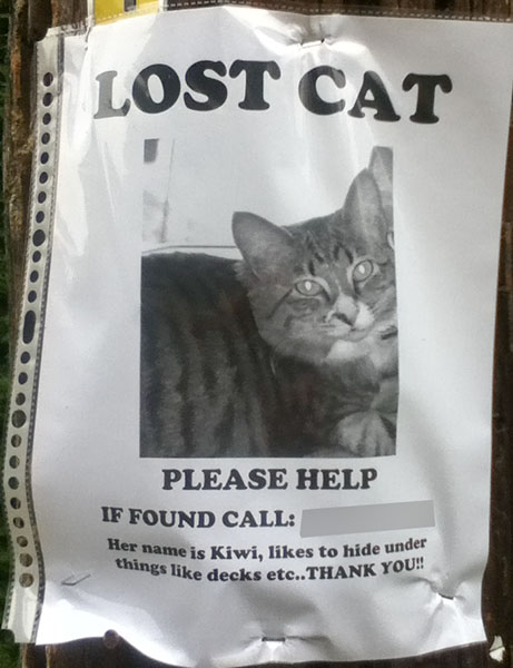 So Many Lost Cat Posters I Have Lost Count The Blog of Otis
