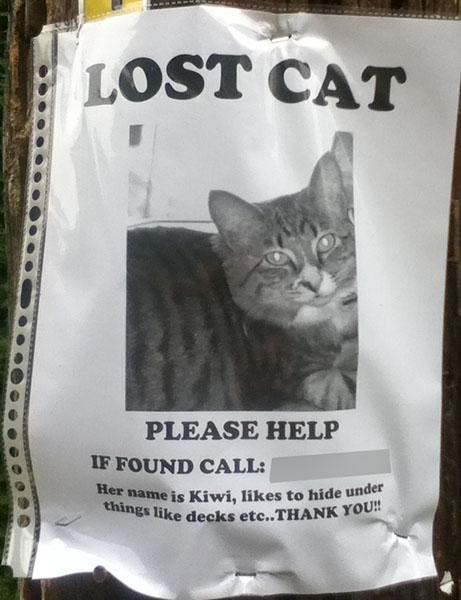 Lost Cat Poster- Kiwi