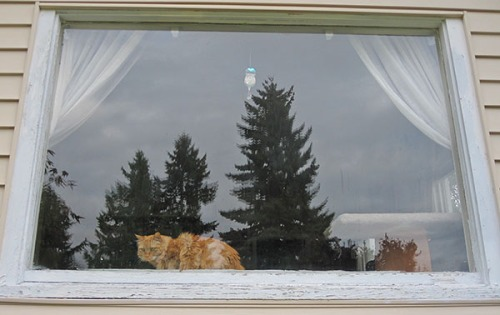 Mama Cat in window 1