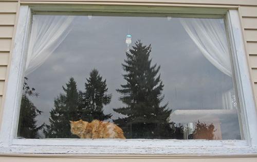Mama Cat in window 1