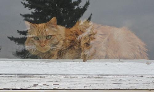 Mama Cat in window 2