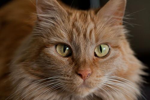Mama Cat staring contest