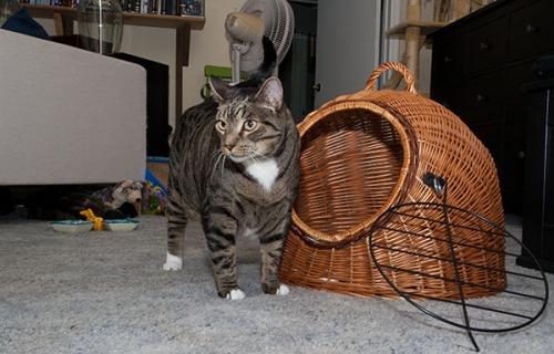 Oliver vet visit 11