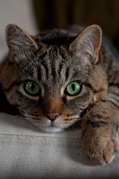 Otis staring contest