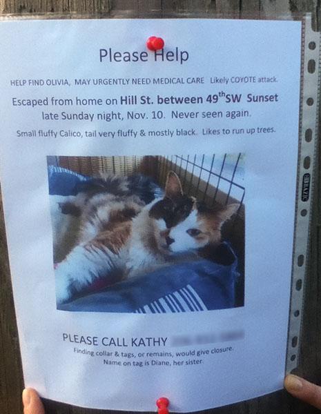 Lost cat- Olivia 111713-1