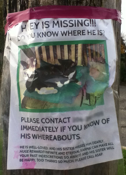 Lost Cat Poster- Huey 110413-2