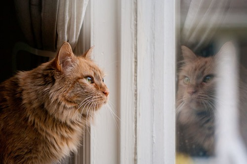 Mama Cat window reflection