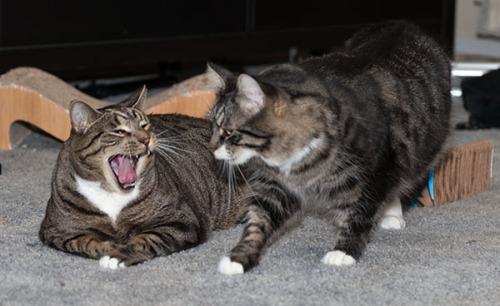 Oliver cracking up at Thomas