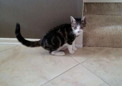 Kitty in hallway