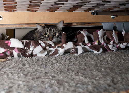 Thomas under couch
