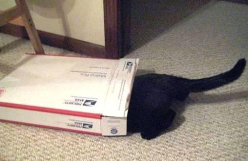 Ernie-box