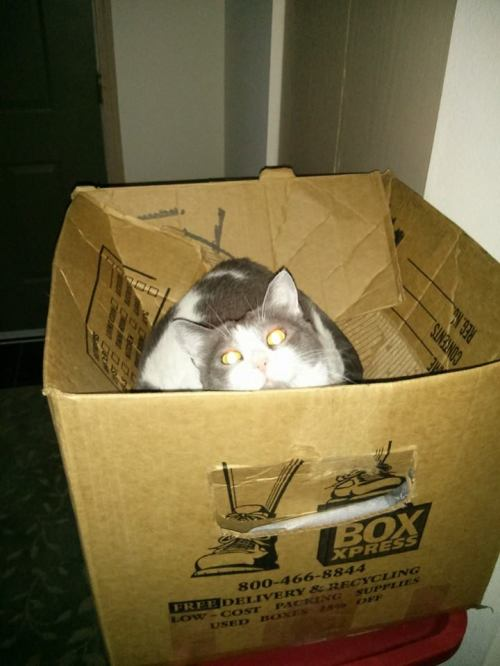 Momo in a box