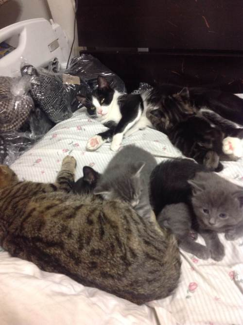 Tabby and Panda with their kittens 1