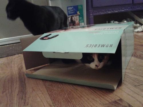 Ruthie in a box