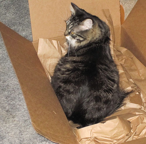Thomas in box