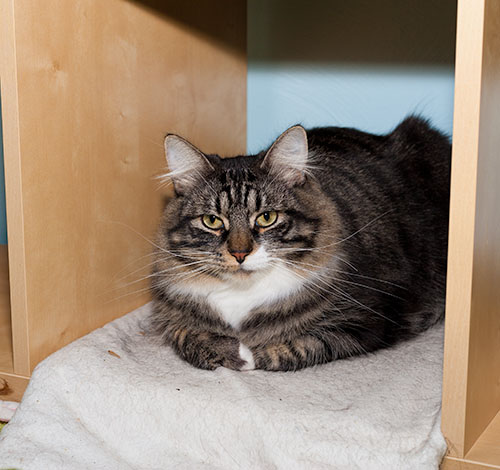 Thomas in cubby