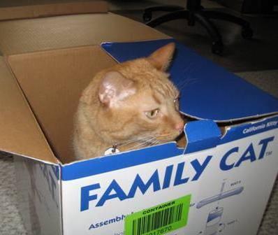 Wally-box