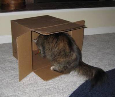 Zoey-box