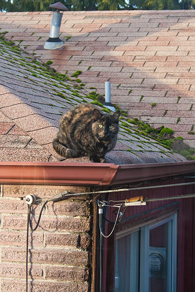 Cookie on the roof 3