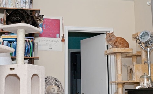 Henry, Mama Cat, towers