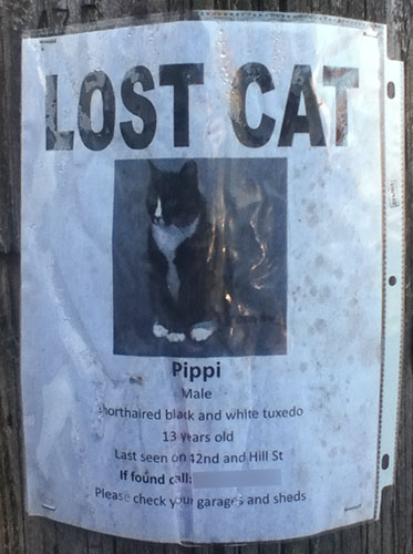 Lost cat- Pippi-2